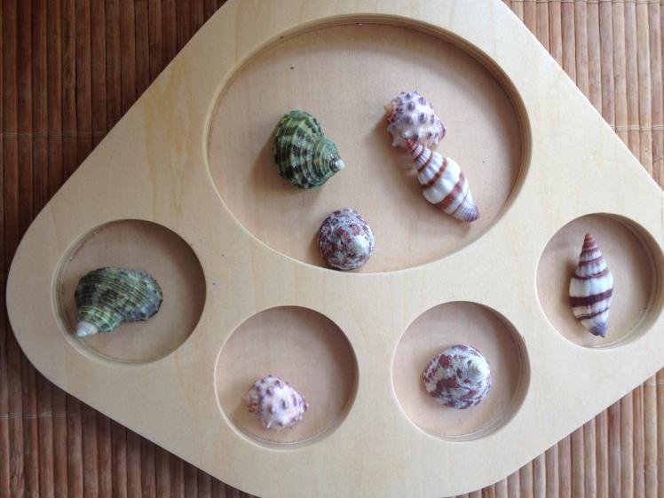 matching shells
