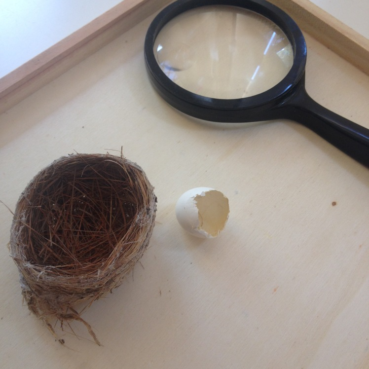 Birds nest and egg