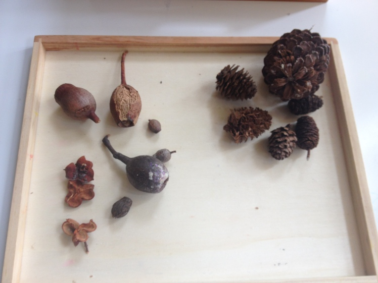 Seed pods and piene cones
