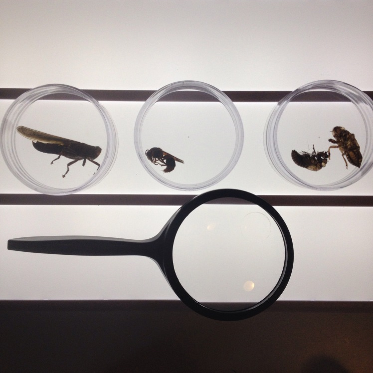 light box insects