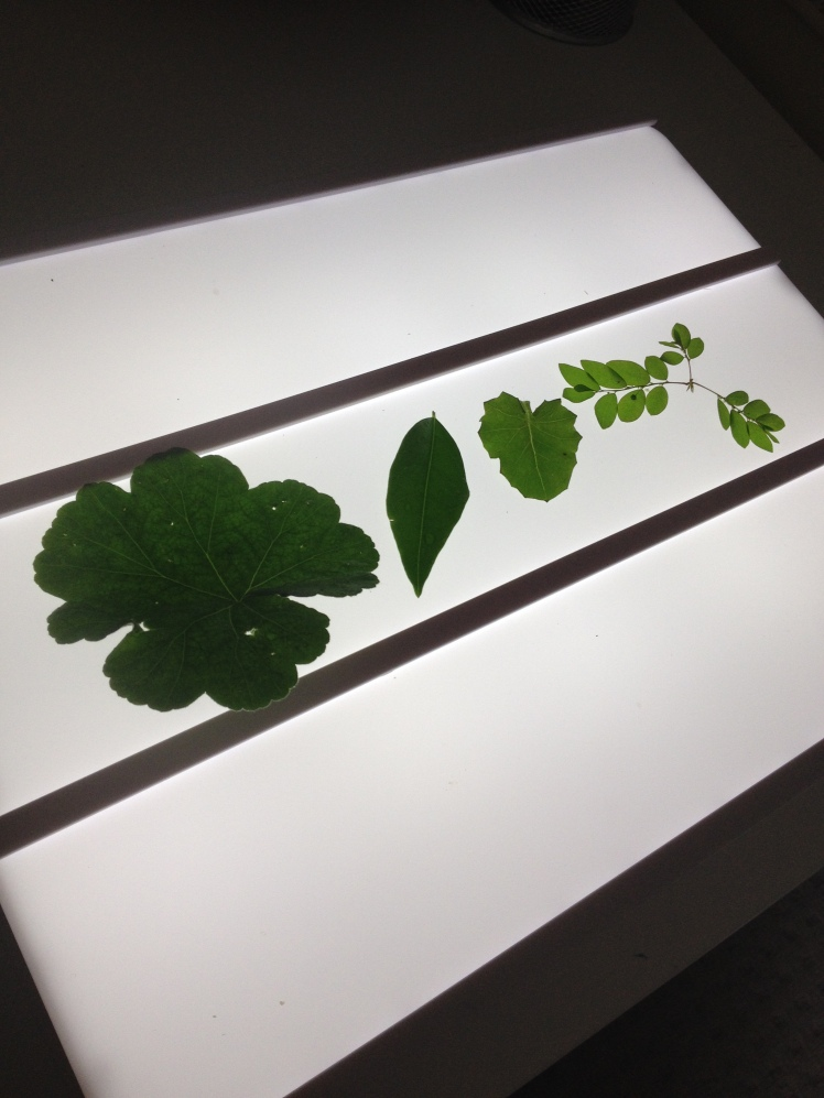light box leaf shape
