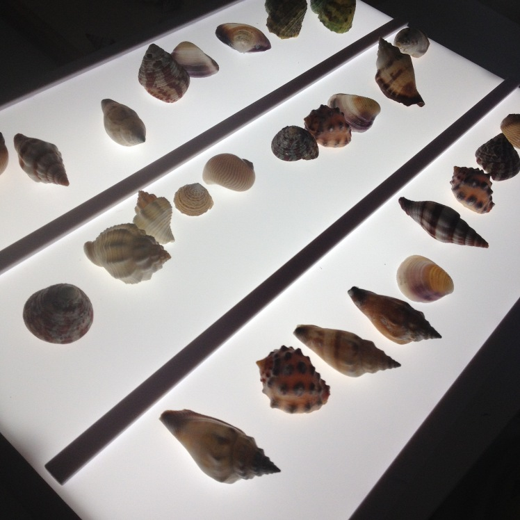 light box shells