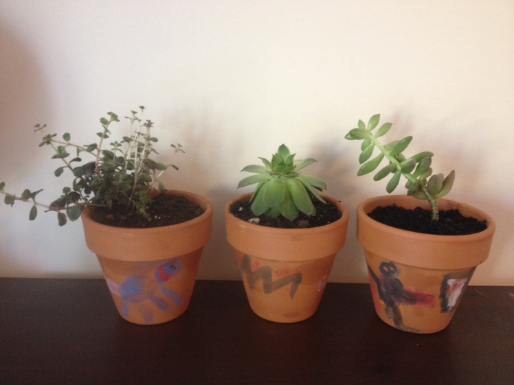 birthday gift painted potted plants