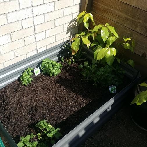 garden-bed