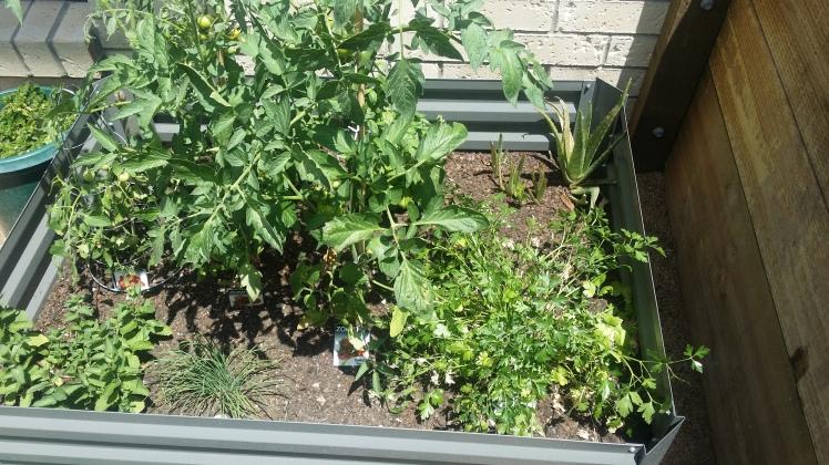kids-garden-bed