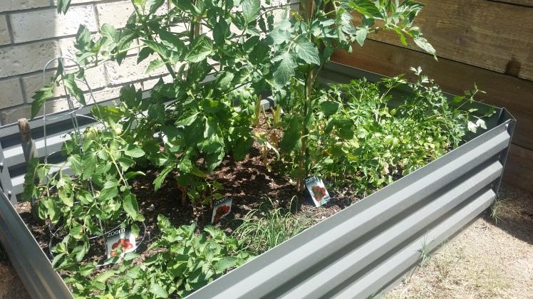 kids-garden-box