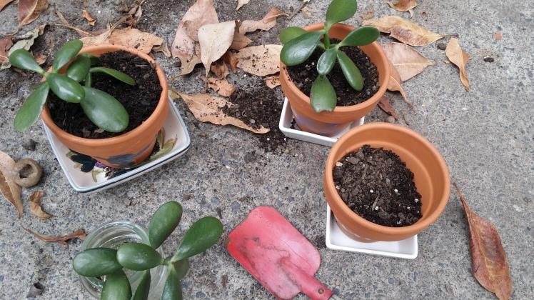 replanting slips