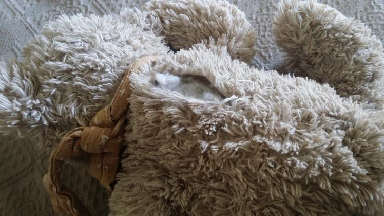 teddy mending