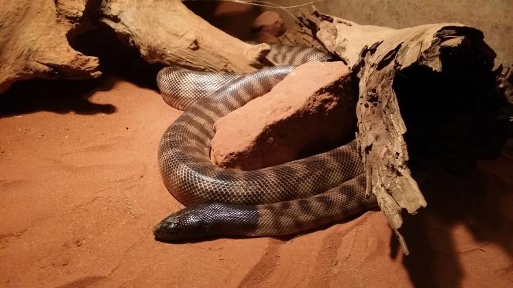 looking at snakes at 5.5 years