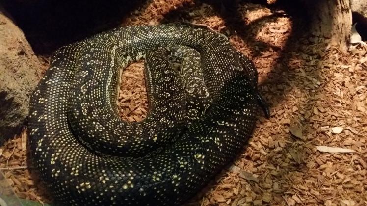 looking at snakes at 5 years