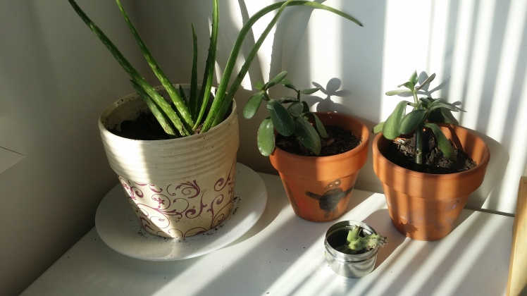 children's desk plants