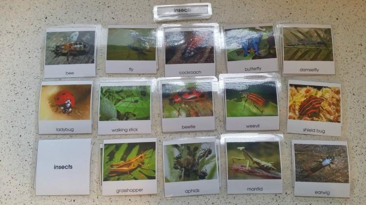 MontessoriInsect3partcards.jpg