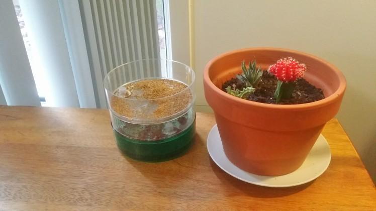 sproutingandpottedcactusandsucculents
