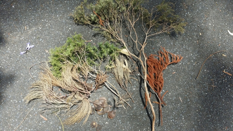 collecting natural fallen items for wreath decorating