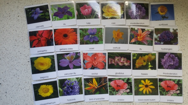 Flower 3-part art cards