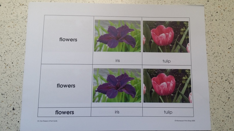 Montessori Print shop Flowers 3-part cards
