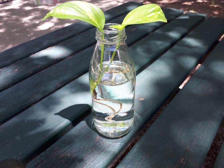 Plant for a Montessori classroom.jpg
