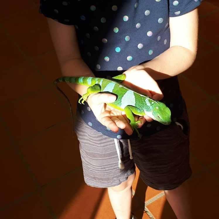 Fiji- Miss wiwth an iguana
