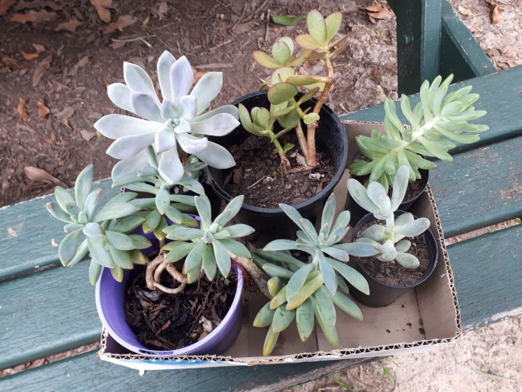 Childrens Garden- Succulents