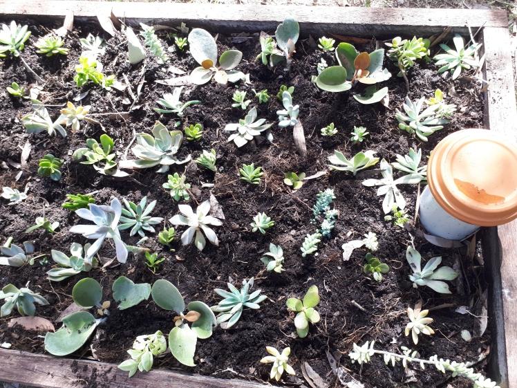 Succulent garden (1)